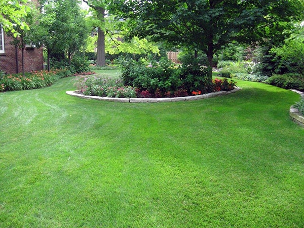 McEnery Lawn Care - Chicagoland Tree and Shrub Care - Palatine Tree and Shrub Company