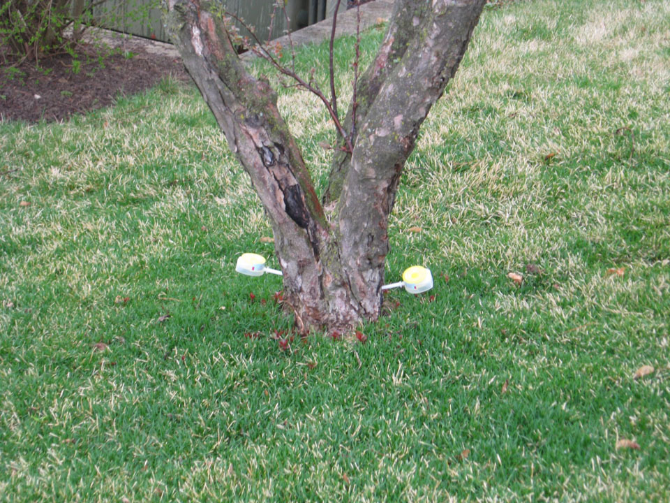 McEnery Lawn Care – Chicagoland Tree & Shrub Care